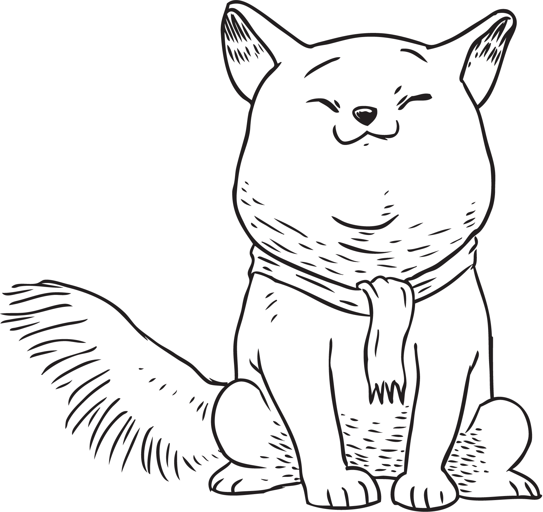 png_chubby-cat