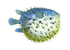 Image result for free clip art sea crafts transparent