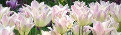cropped-beautiful-flowers-cute-white-facebook-cover-photos.jpg