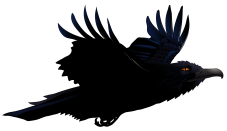 Raven-PNG-Picture